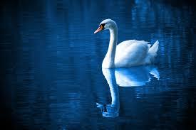 swan lake synopsis