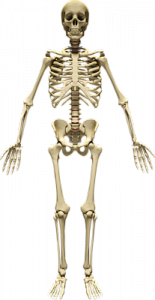 can you prevent osteoporosis
